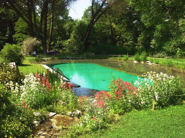 il biolago una piscina naturale e biosostenibile coffee