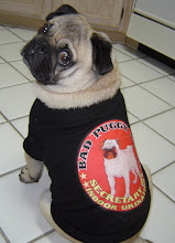 Studio Assistant Howard Pee Pugpants