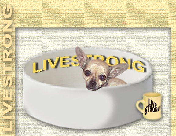 twinkie tiny dog teacup chihuahua a dog blog oct 2 2010. Black Bedroom Furniture Sets. Home Design Ideas