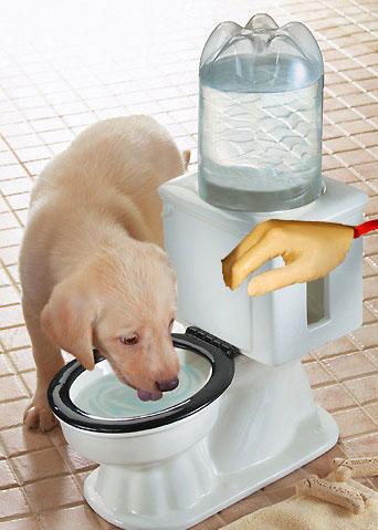 how to cut toilet flush pie
