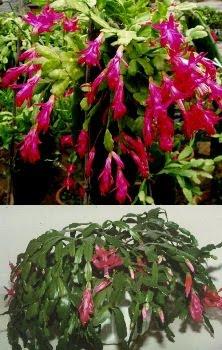Casasplendente le piante da tenere in appartamento per - Piante da tenere in camera da letto ...