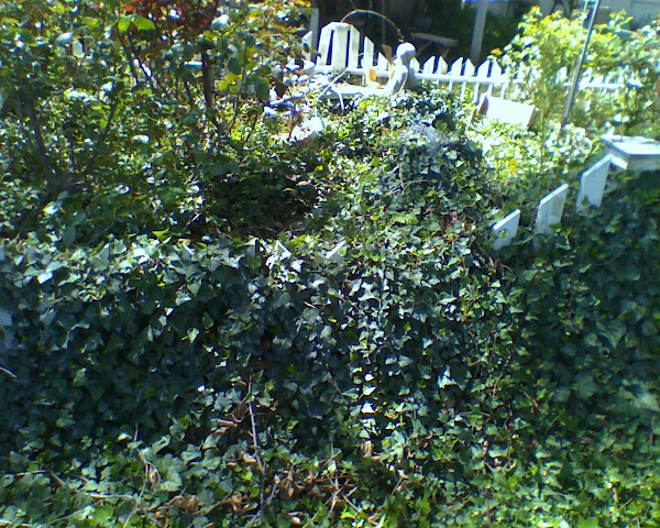 "This is what $1.49 pot of ivy can do to your garden! .. This ""was"" my 'children's garden'."