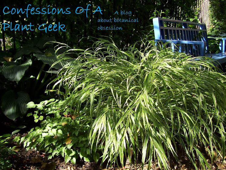 Confessions Of A Plant Geek