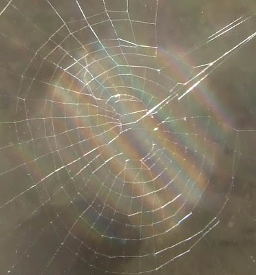 Spider Web Picture