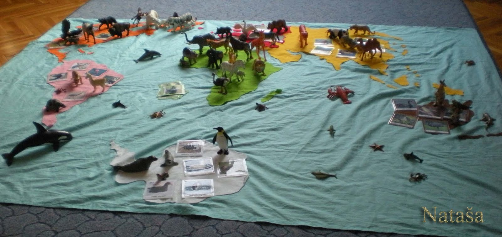 Sorting Animals by Continent (Photo from Leptir)