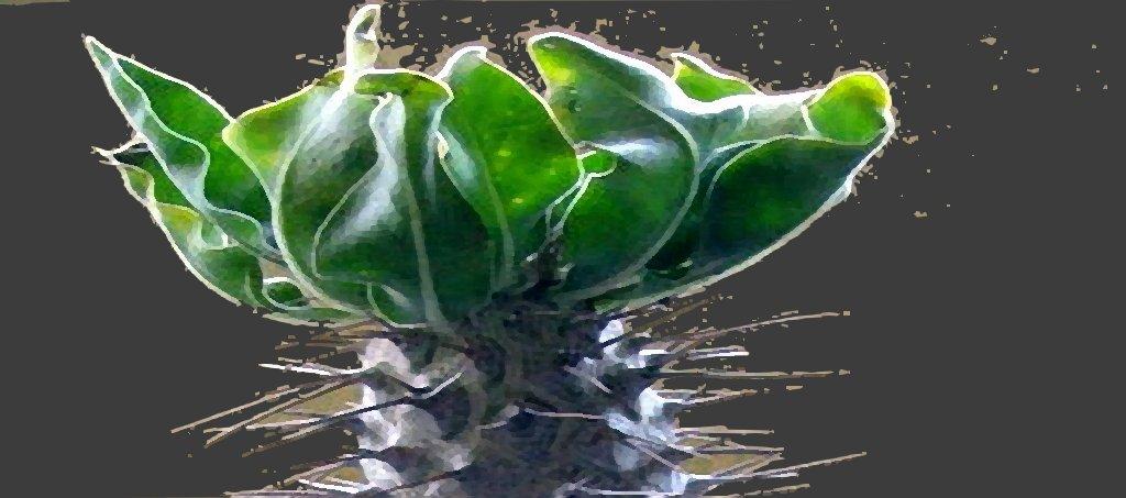 Mis Plantas exoticas - 2009