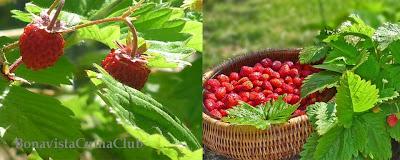 Receta pastel fresitas jardin y frutos bosque