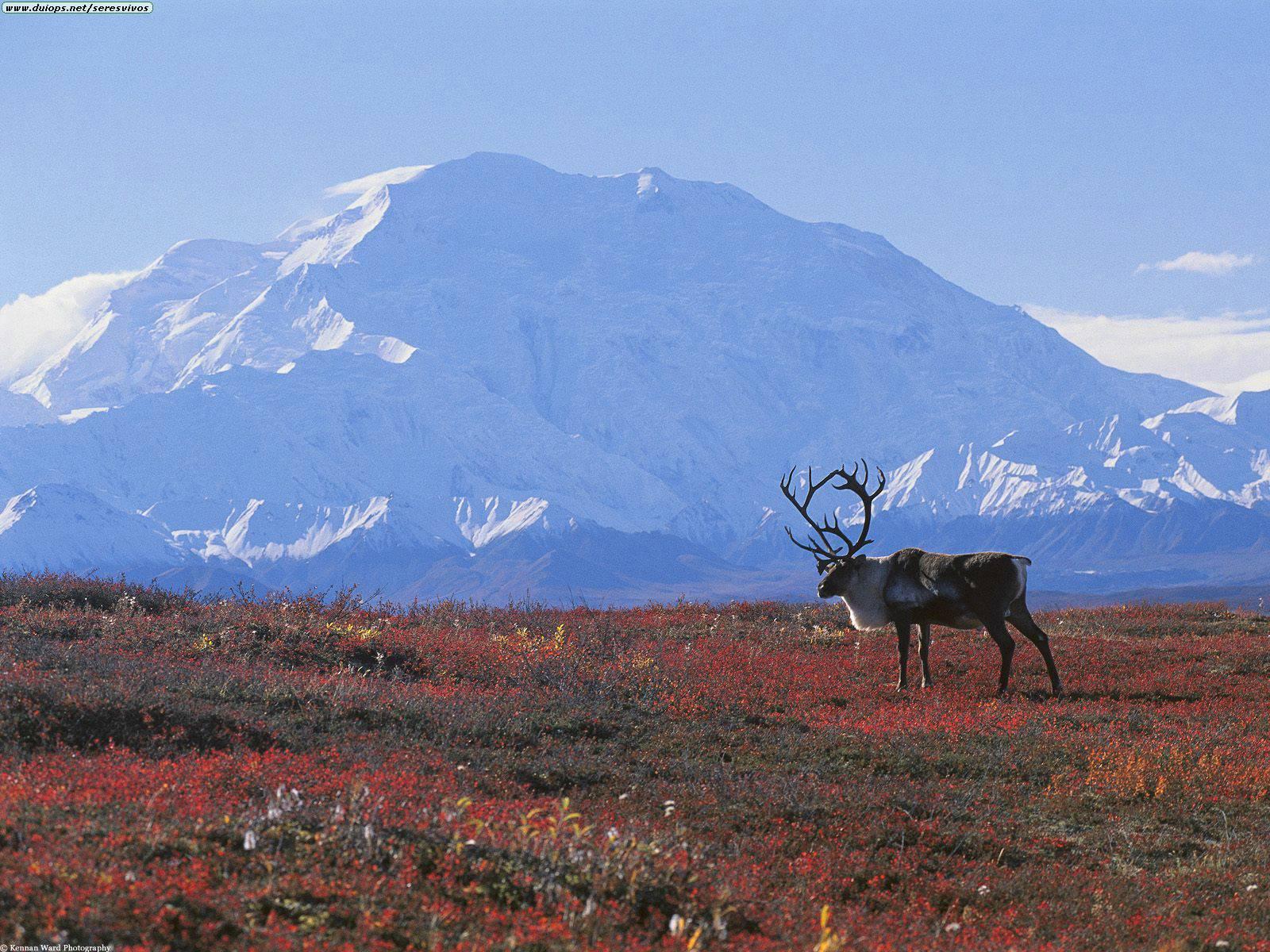 Tundra - Lessons - Tes Teach