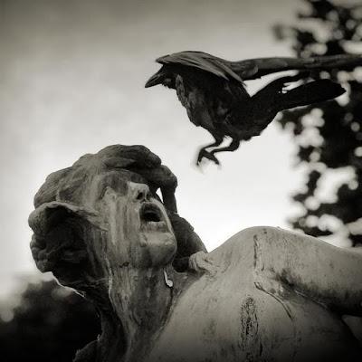 تصاویری دیدنی از رفتارهای عجیب پرندگان - takmahfel.com
