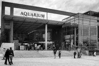 aquarium la rochelle visite