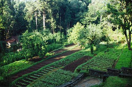 Vegetable Garden: Vision Board