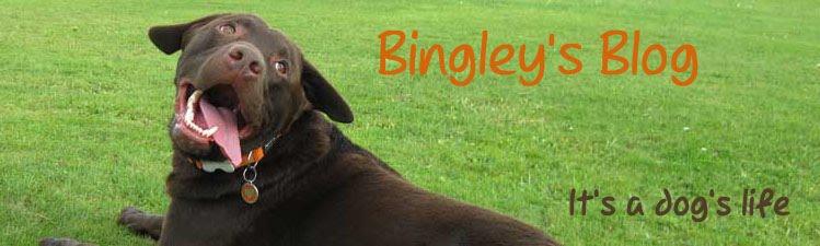 Bingley's Blog