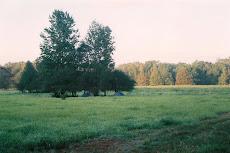 persimmon field