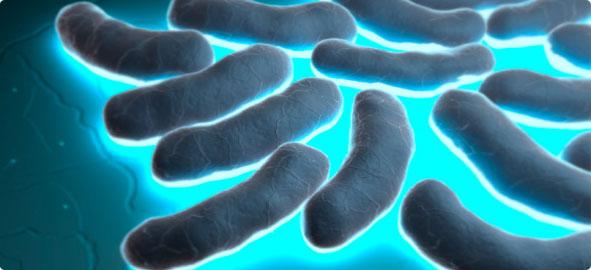 Image result for Bakterilerin antibiyotik direnci genellikle Darwinistler tarafından sözde evrimleşmeye bir delil olarak gösterilmeye çalışılır.