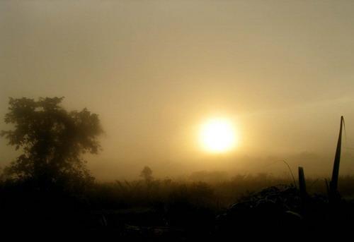 suatu pagi di kalimantan
