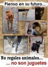 No regales Animales