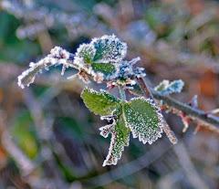Frosty January 1/09