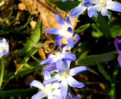 Spring! 4/09