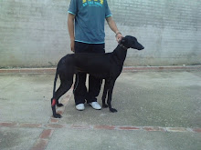 "GALGO""TRIPLE X""."