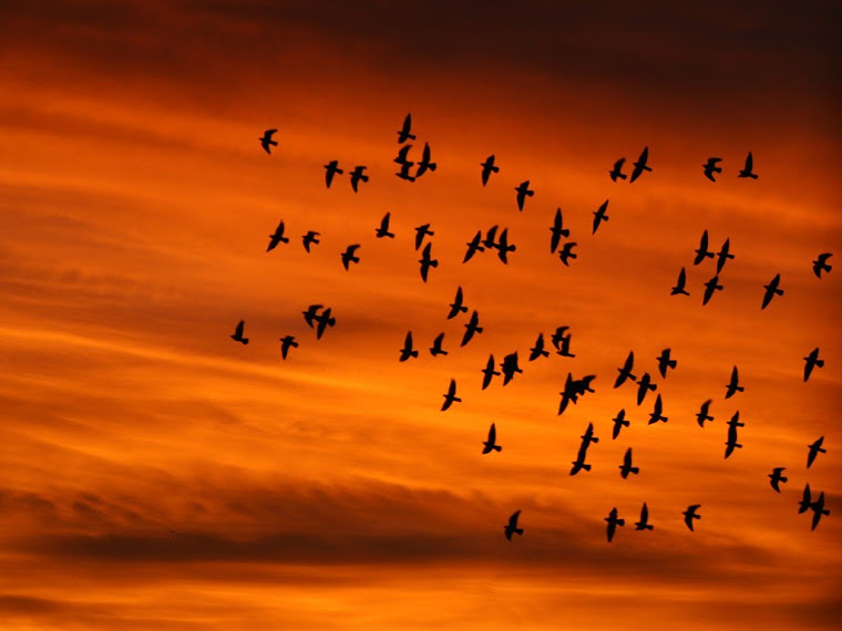 Pájaros a punto de volar