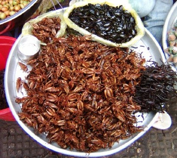 fried insects yummy