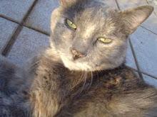 Chippa (1991-2004)