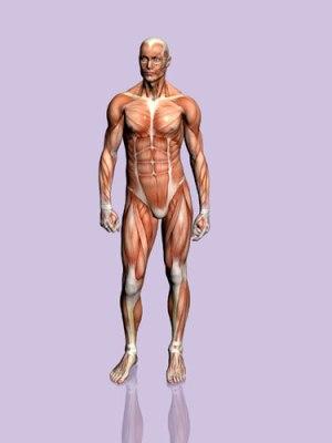 partes del cuerpo humano. portada:el cuerpo humano
