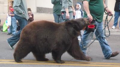 ... bear, and man i really like him. Gosh, i really want to date hi so bad.