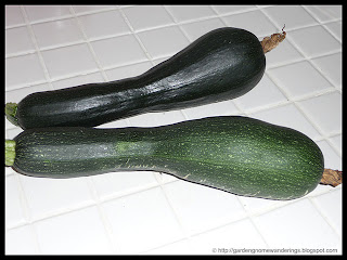 zucchini summer squash
