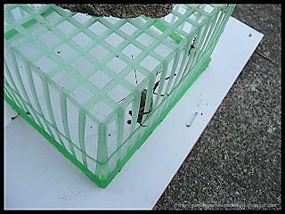 grasshopper jail