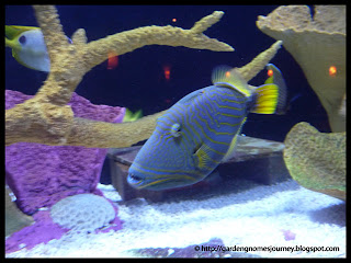 blue striped fish