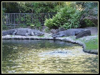gator pond
