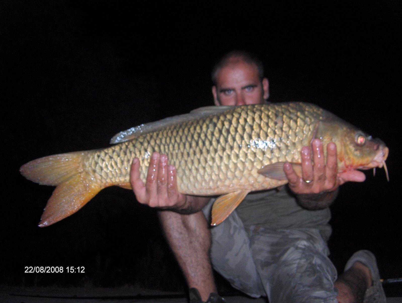 Carpa 7 kg Lagoa de Mira 24 Agosto 2008