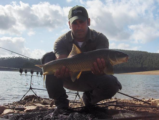 Barbo 2,5 kg mas muito comprido. Este Peixe encontrava-se subnutrido... Aguieira  7 Outubro 2008