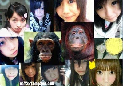 Benarkah Gambar-Gambar Yang Diletakkan Di Dalam Rangkaian Sosial Di Tiru Dari Haiwan?