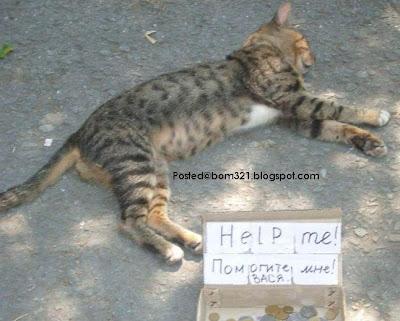 beggar animal