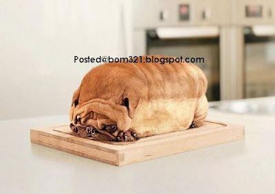 bread or dog