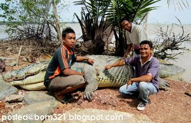 Sah! Buaya Di Port Di Port Dickson Memang Wujud !