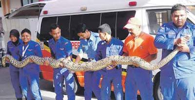 penjara pudu ular