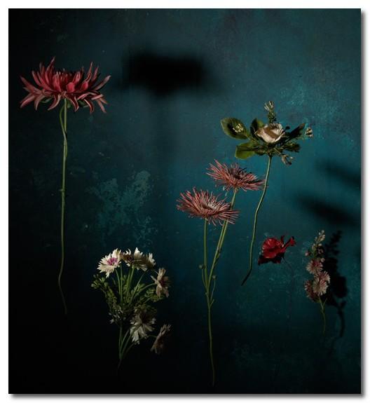 designs by sylvia marius