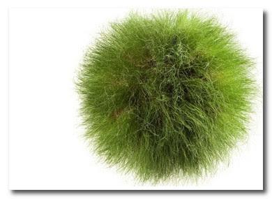 grass orb