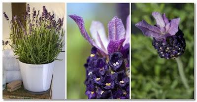 plants by phillipa craddock