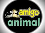 AMIGO ANIMAL CURITIBA