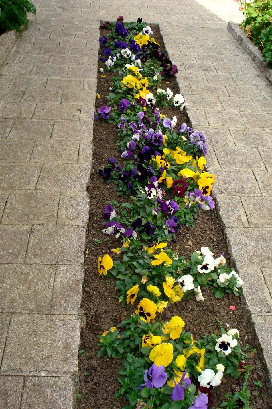 flores jardim pequeno: BESTEN FREUND * NO ABANDONE A SU MEJOR AMIGO: UM JARDIM DE SURPRESAS