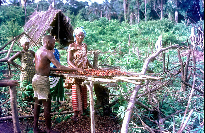 processing palm nuts near Vaama (Nongowa)