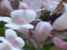 A Bee's Wings in a Flower Smothering Itself in the Sweet Stuff