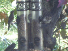 A Very Busy Day at The Bird Feeder