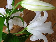 Lilien [C. Hoff]