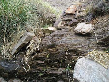 Quebrada en Carolina (San Luis)