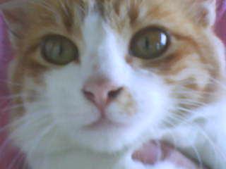 Catatan Harian Saya Fakta Tentang Kucing Kampung